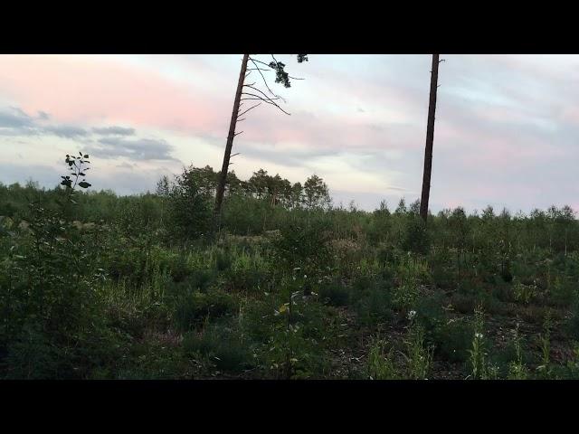 Stąporków - Leśny zawód miłosny / Woodland heartbreak