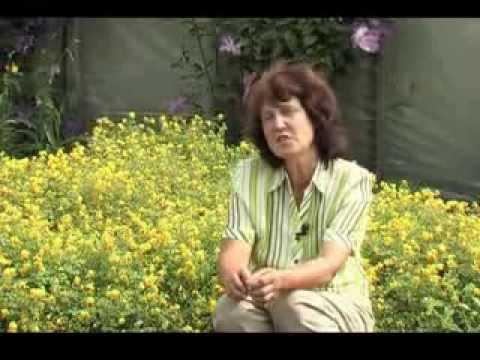 Хохлатка. Многолетние цветы.