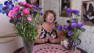 Букет Астры Стоит и Не Вянет - Мой Секрет