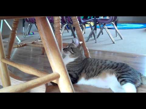 Watch Kitten Pounce on Cat | Day Three After They Met