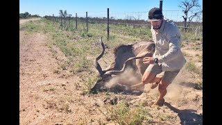 Kudu Rescue in Central Kalahari