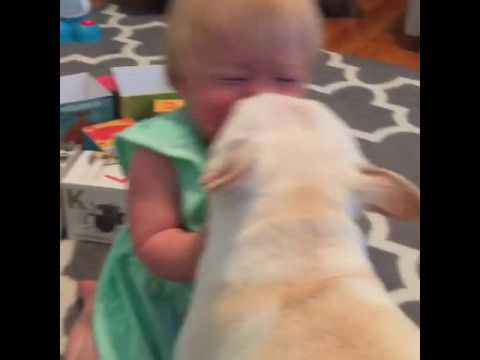 Baby Giggles while Dog Licks Her