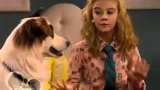 Собака точка ком   1 сезон 12 1серия SMD