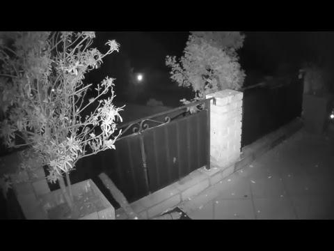 Pot Plant Owl Live Stream