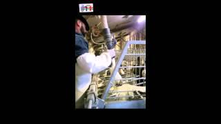 Чеченцы в Европе(В этом видео вы увидите как подкармливают уток в ручную для ожирения . JOIN VSP GROUP PARTNER PROGRAM: https://youpartnerwsp.com/ru/join?..., 2015-07-18T00:34:45.000Z)