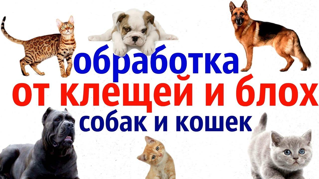 как обрабатывать собак от блох