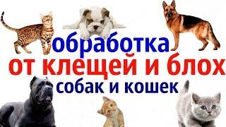 Обработка от клещей и блох собак и кошек.