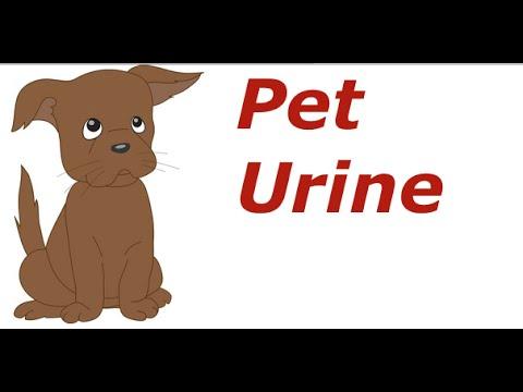 how to get dog cat urine out of carpet youtube. Black Bedroom Furniture Sets. Home Design Ideas