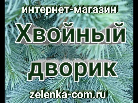 "Саженцы хвойных питомник ""Хвойный дворик""сезон осень 2018"