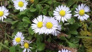 23. Цветковые травы. Часть 2