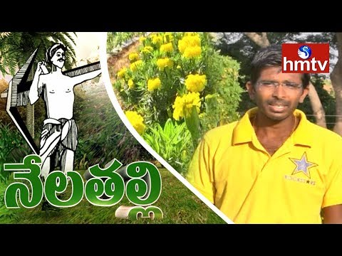 Young Ideal Farmer Pradeep Reddy Earn High Profits From Mult