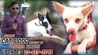Sunday Dog & Cat Saddar Market 23-9-2018 Latest Updates (Jamshed Asmi Informative Channel