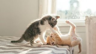 Kittens fighting and playing.. just for fun