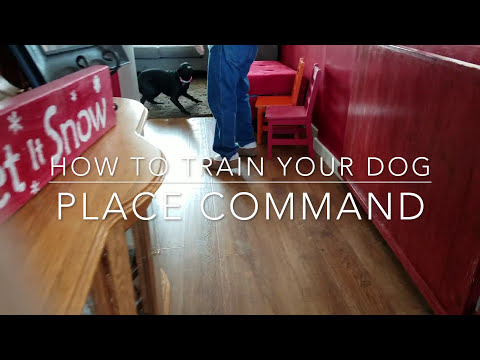 How to Train Your Dog | Place Command | Bakers Acres K9 Academy