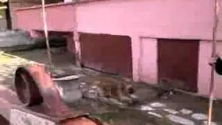 Köpek koşturdu :D
