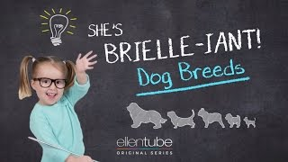 The Ellen Show: Dog Breeds thumbnail