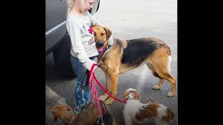 Dog Only Allows Little Girl To Rescue Him | The Dodo thumbnail