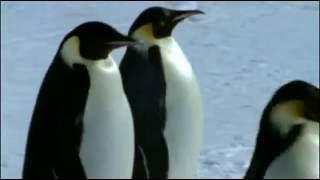 Лики природы - Пингвины
