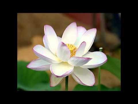 Thiền Sư An Lạc Hạnh - Tiền thân hậu kiếp Phật Di Đà 1