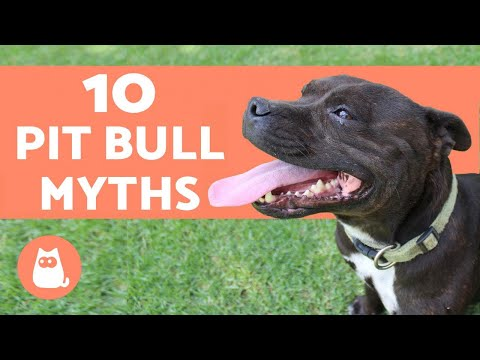 10 Myths About Pit Bulls - And the FACTS to Disprove Them