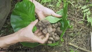 Survival Instinct - The 6 Month Survival Challenge In The Jungle - Part 10