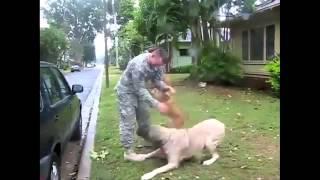 Собаки встречают своих хозяев, вернувшихся из армии