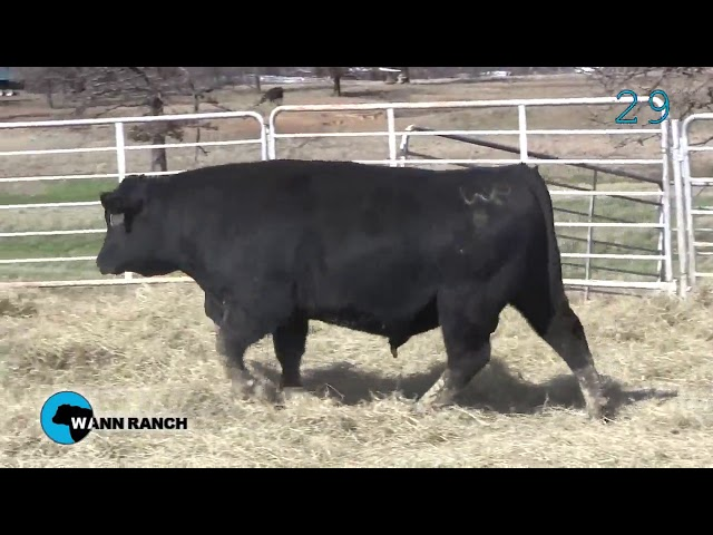 Wann Ranch Lot 29