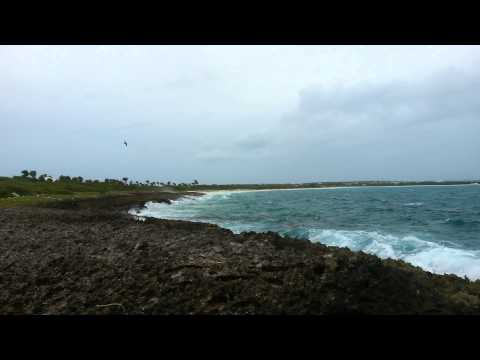 Anguilla ocean waves and a bird