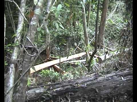 155-56-พัทลุง-เสียงปืนแตกในป่าเขาบรรทัด จากเอียด เส้นเอียด