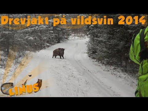 drevjakt på vildsvin 2014