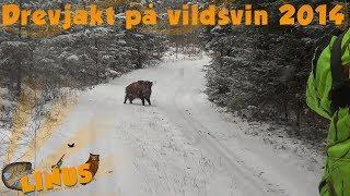 Video drevjakt på vildsvin 2014 download MP3, 3GP, MP4, WEBM, AVI, FLV Oktober 2018