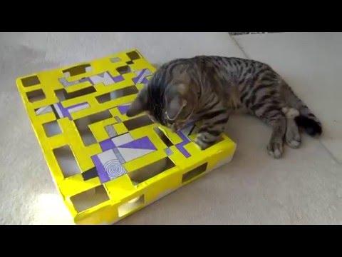 Thumbnail for Cat Video Interactive cat puzzle box DIY