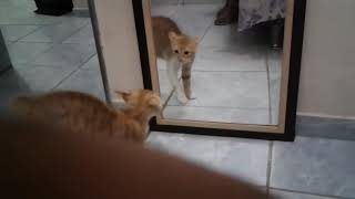 Кошка срёт от испуга своей отражении вот это прикол