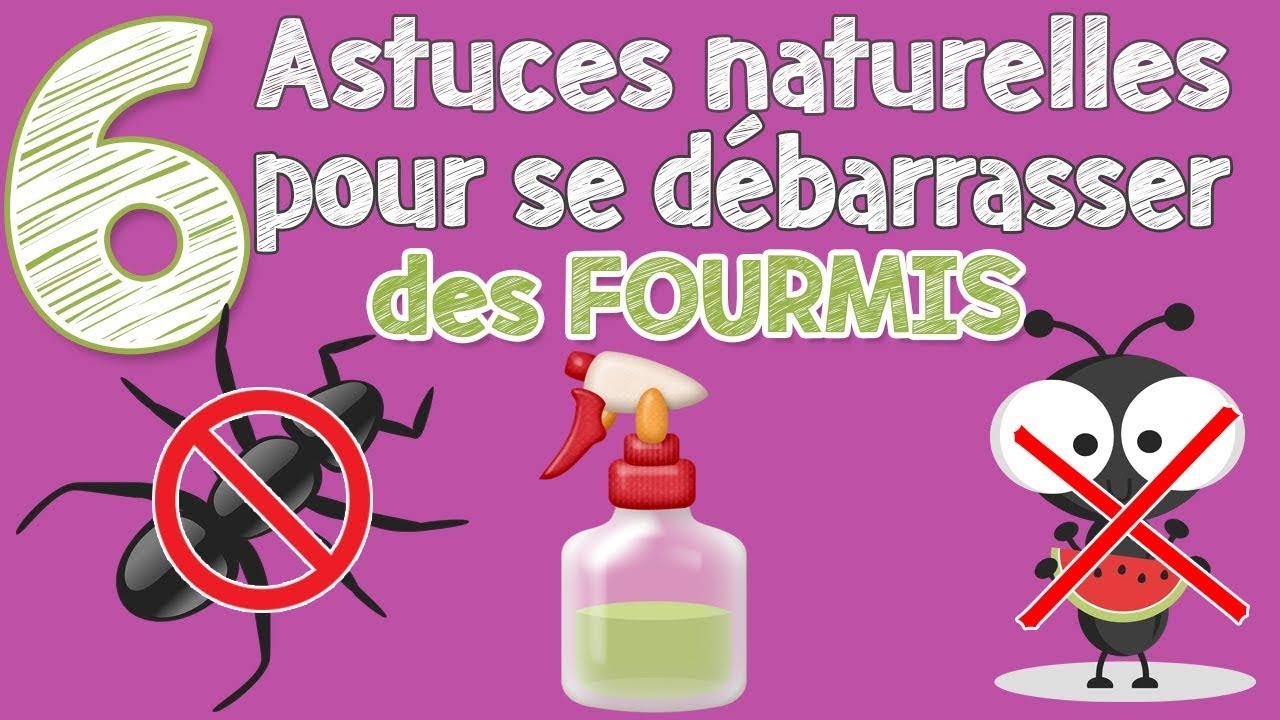 Astuces Naturelles Pour Se Débarrasser Des Fourmis comment se débarrasser des fourmis sans produits chimiques !