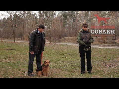 Охотничьи собаки. 19 серия. Вельштерьер