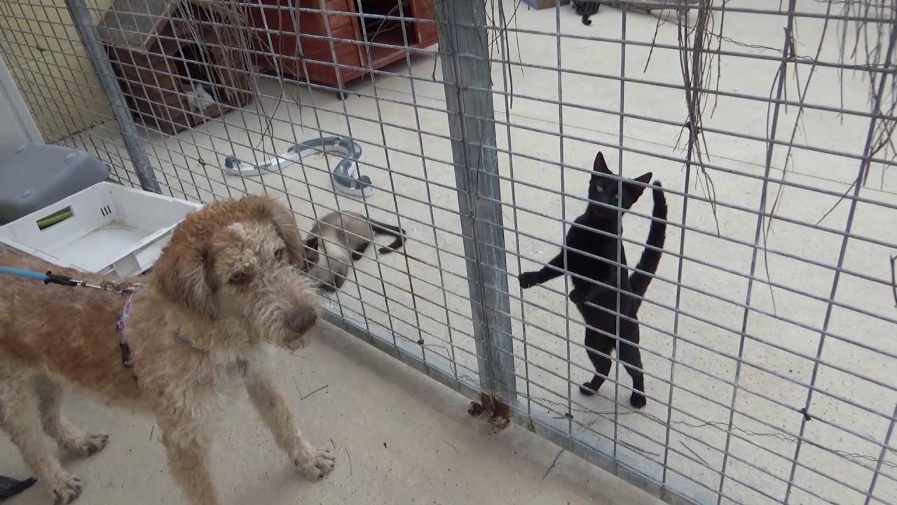 Lenny con gatos protectora de animales de m laga youtube for Protectora de animales malaga ciudad jardin