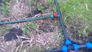 Как поливать клубнику / Капельный полив клубники / Системы полива