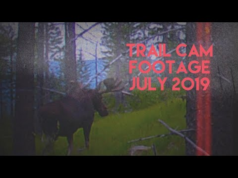 Hunting Washington: Trailcam Footage From July, 2019-Colville National Forest