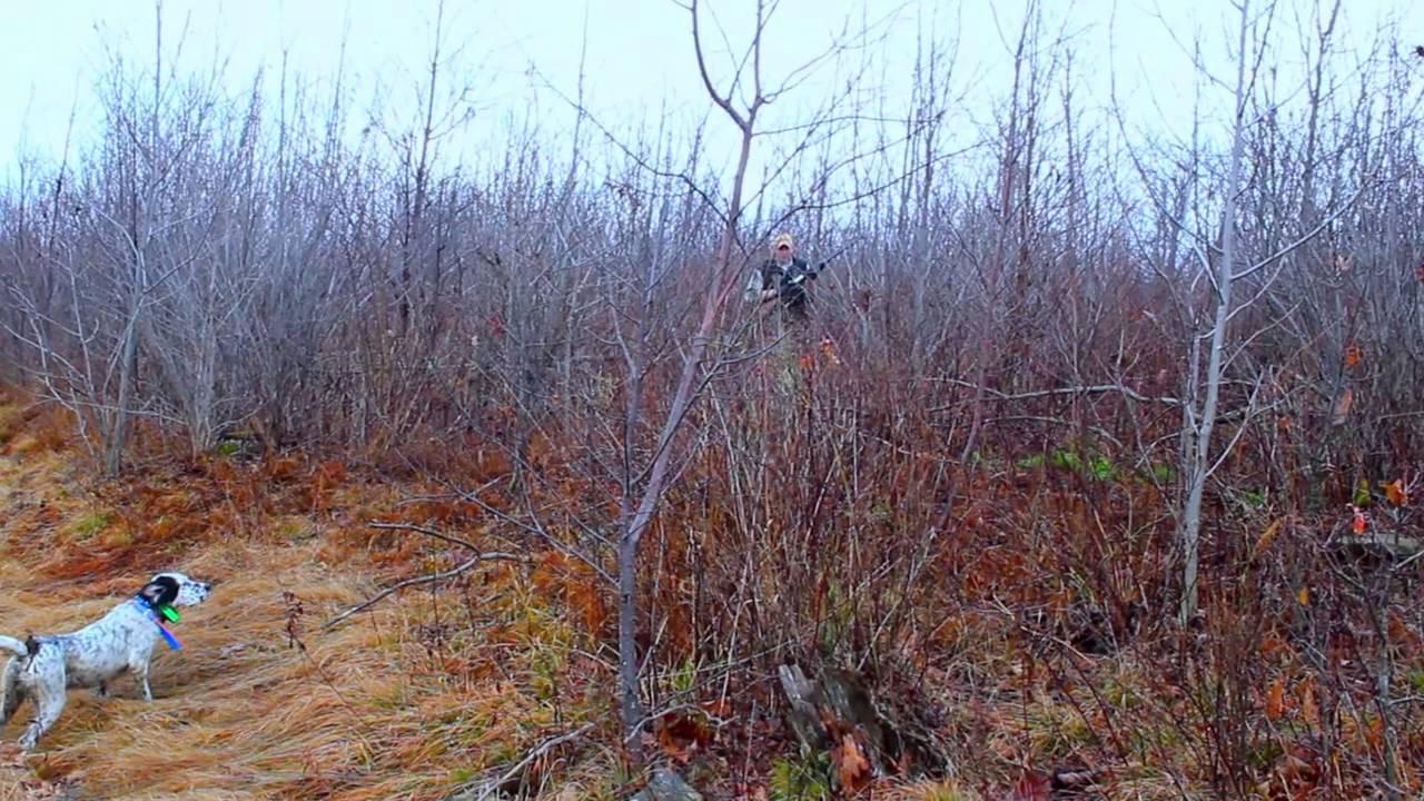 Ruffed Grouse Habitat