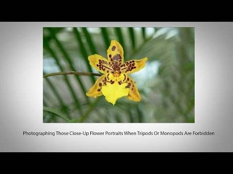 Photographing Those Close-Up Flower Portraits When Tripods Are Forbidden