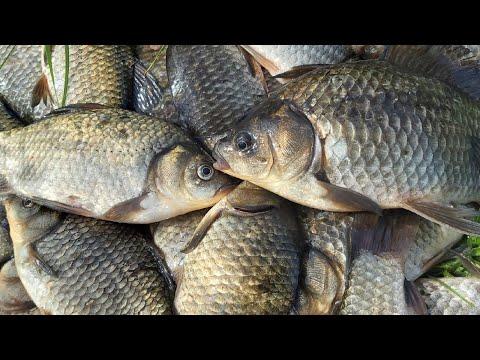 С этой насадкой и червь не нужен! Крупный КАРАСЬ на удочку в дебрях камыша! Летняя рыбалка 2020.