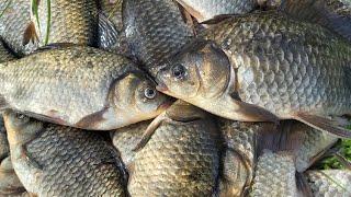 С этой насадкой и червь не нужен Крупный КАРАСЬ на удочку в дебрях камыша Летняя рыбалка 2020