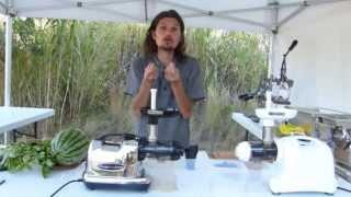 Tout sur les extracteurs de Jus !!! - www.regenere.org
