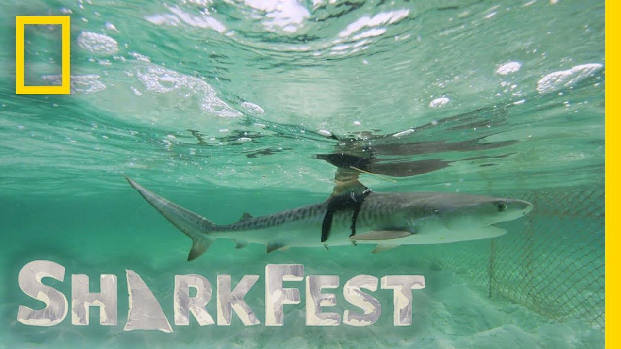 Tracking Tiger Sharks at Night | SharkFest