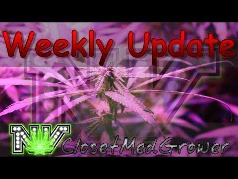 Weekly Update 7/13/2017