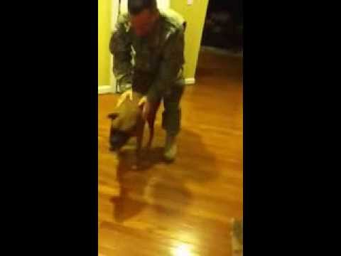 Dog welcome soldier home