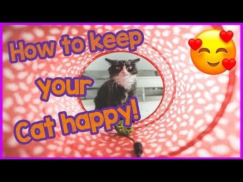 keeping-your-indoor-cat-happy---top-tips!