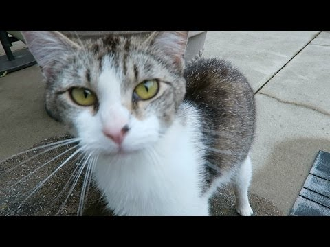 Cute Cat Video - Friendly Feral Cat In My Yard - Meowing
