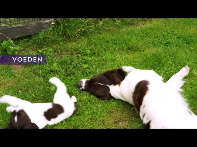 Voordeel 10: De aanwezigheid van de moederhond