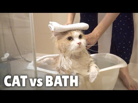 Cat vs Bath | Kittisaurus